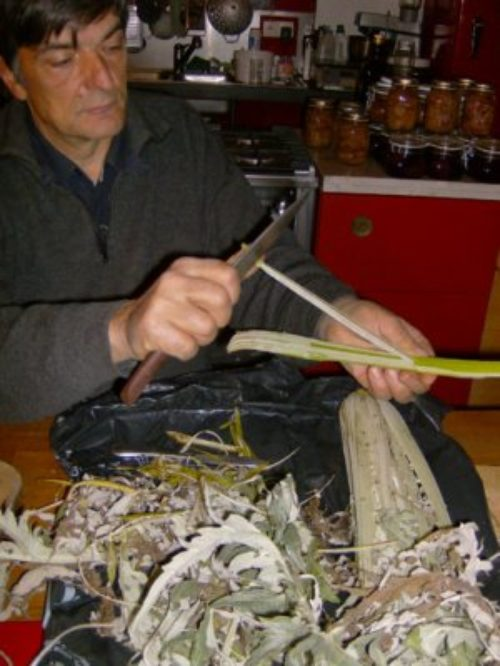 Recettes Le cardon de ma maman · Encyclopédie du jardin · Association Les cueillettes de Landecy